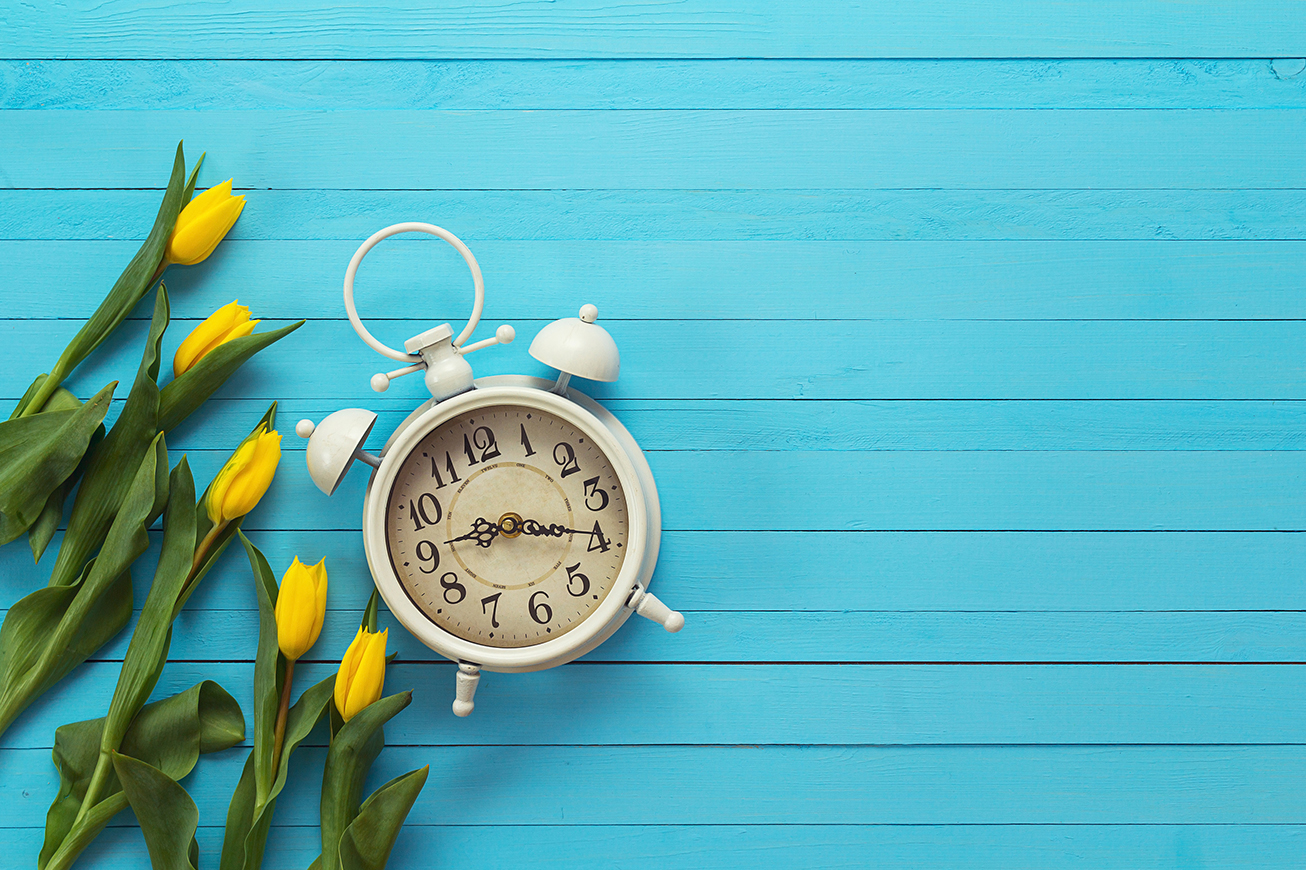 Background with white alarm clock and yellow tulips on blue painted wooden planks. Place for text. Top view with copy space